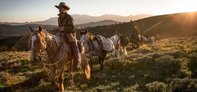 2017-une-unbranded-1